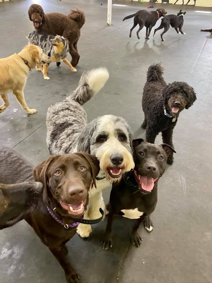 Dog Zone Day Care